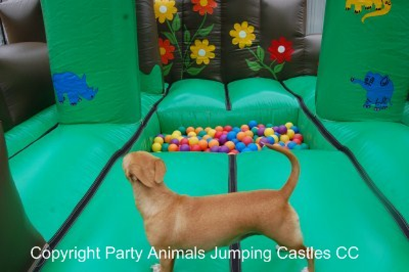 Jungle Ball Zone 2 Fun 4 Party Animals For all your Jumping Castles and party hire needs